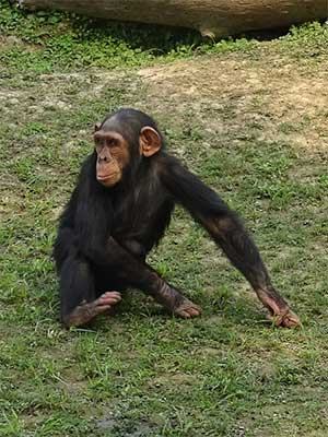 Chimps and the Zen of Falling Water