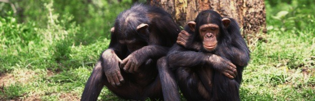 Humans and Chimpanzees